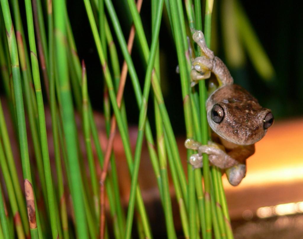 Attract wildlife to your garden