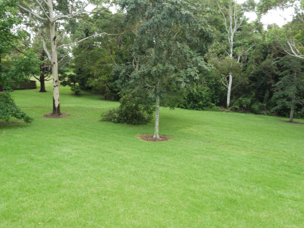 Lawns in the landscape